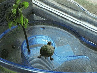 Чем кормят маленькую красноухую черепаху в домашних условиях 858