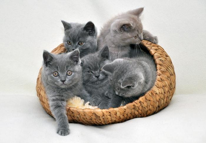 mokré krémové mačička obrázky zblízka na mačička