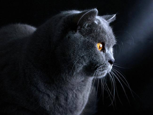 najhustejšie čierna mačička