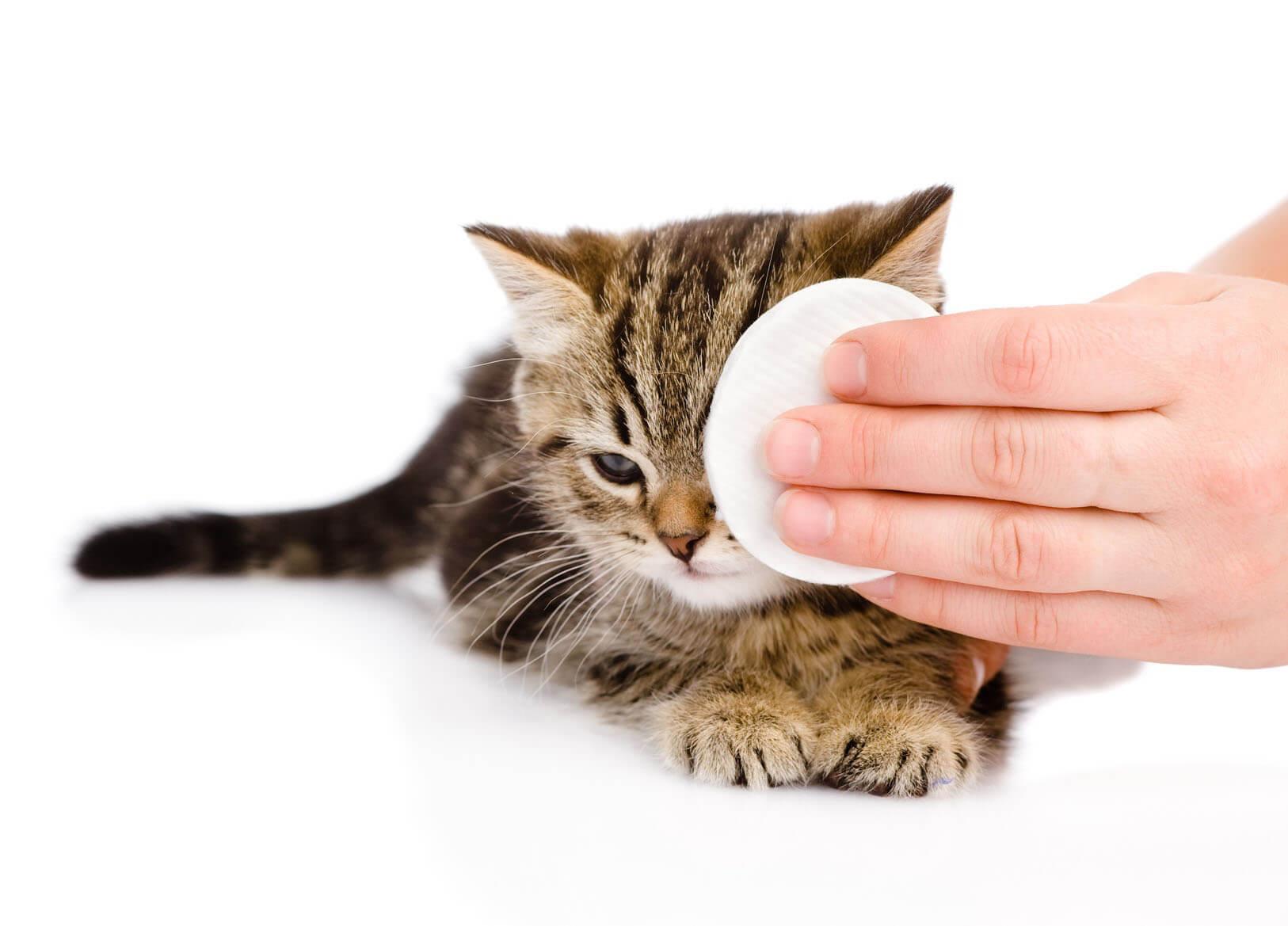 Kedi akıyordu. Ne tür bir hastalık ve nasıl tedavi edilecek