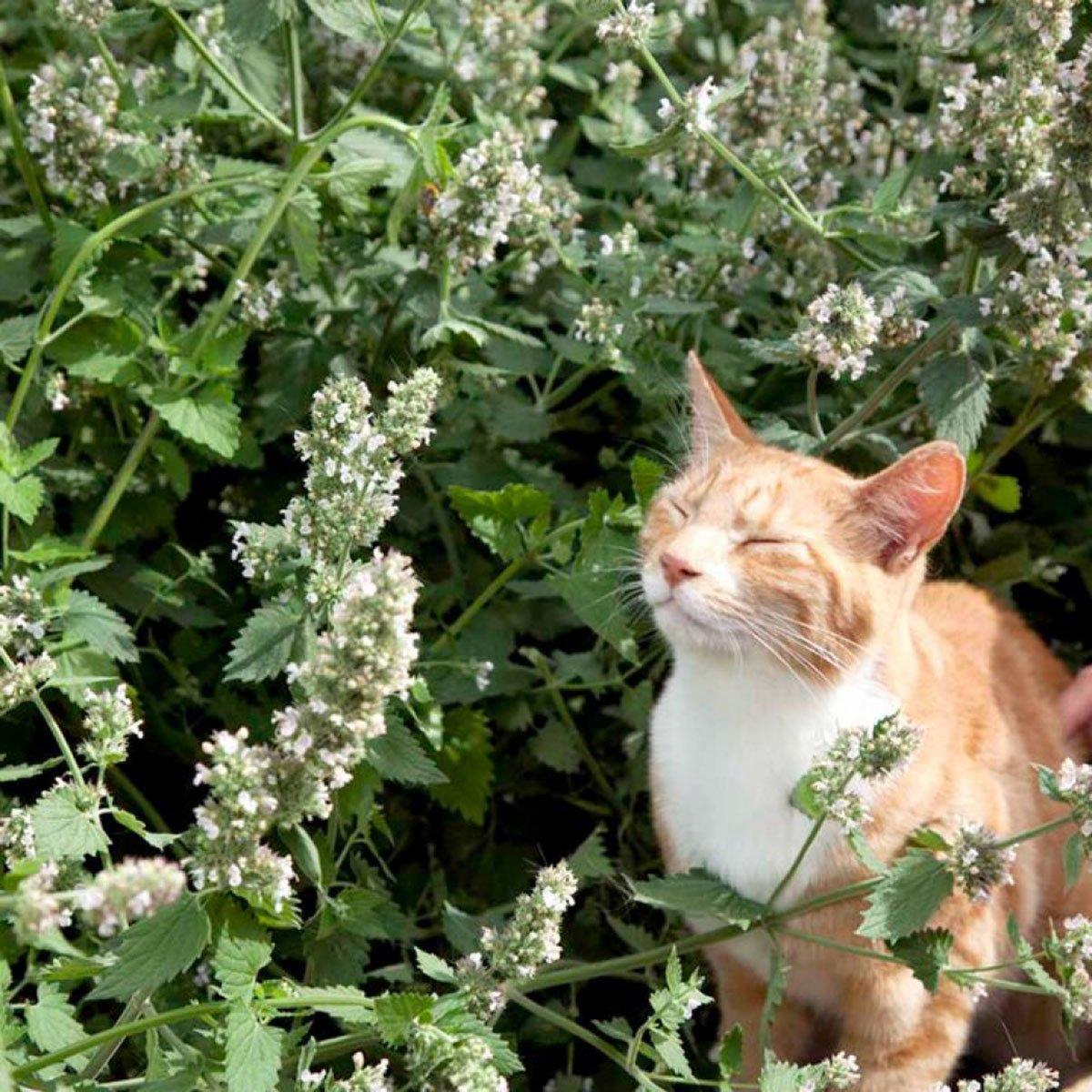 hladké tesné mačičkačierna mačička miluje Biely kohút