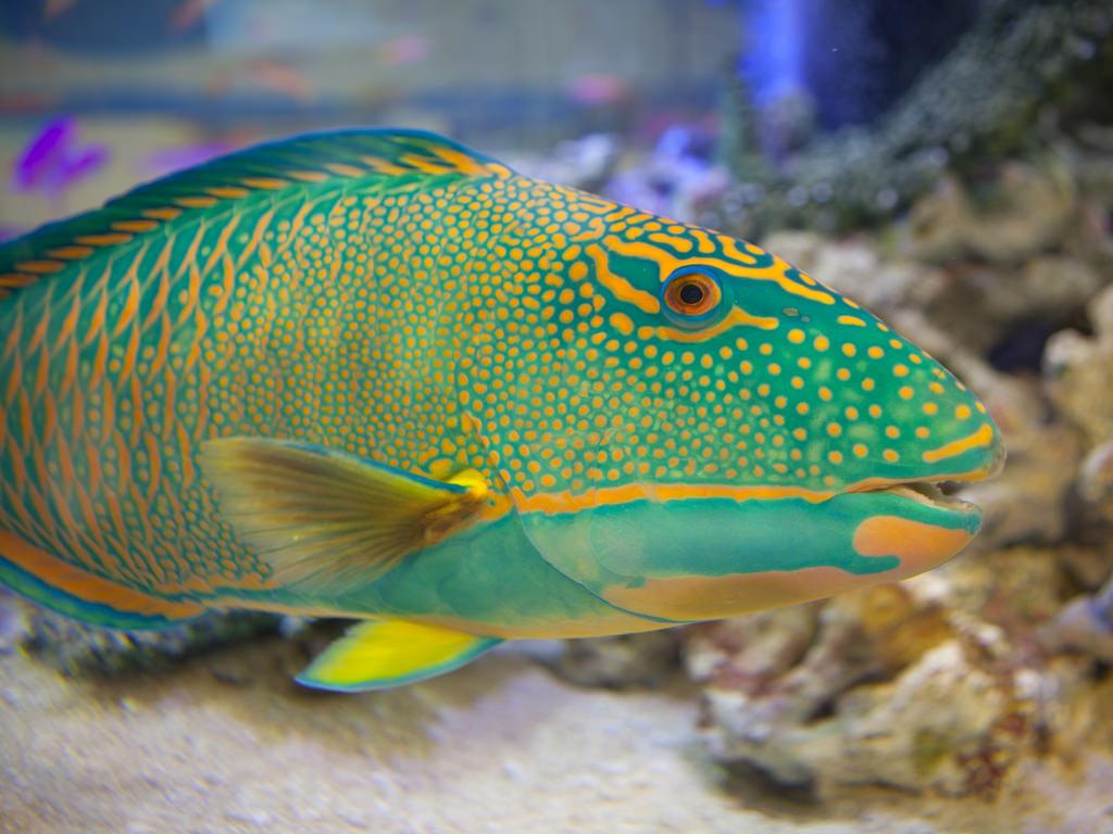 5e31b838b0def0 У нашому інтернет магазині представлений великий вибір морських рибок для  акваріумів, серед яких наші покупці обов'язково знайдуть саме те, що шукали.